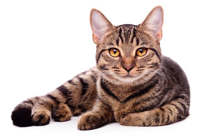 Katzenfreundliche Praxis