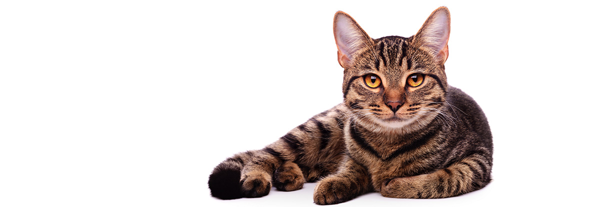 Das Katzenzimmer